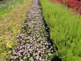 Pokrovne rastline za škarpe